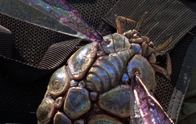 Stargate SG-1 - Lexikon - Insekten BP6-3Q1 - 2